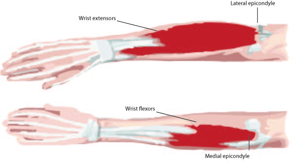 The Anatomy of the Elbow